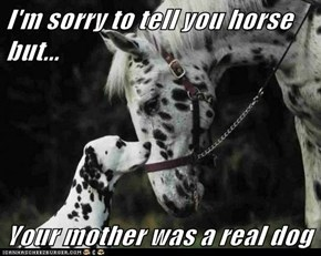 I'm sorry to tell you horse but...  Your mother was a real dog