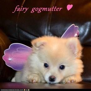 fairy  gogmutter  ♥