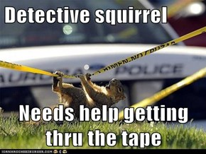 Detective squirrel  Needs help getting thru the tape