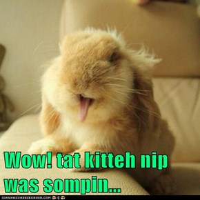 Wow! tat kitteh nip was sompin...