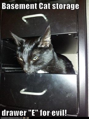 "Basement Cat storage  drawer ""E"" for evil!"
