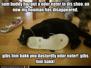 sum buddy haz put a odor eater in dis shoo, an now my hooman has disappeared.        gibs him bakk you dasturdly odor eater!  gibs him bakk!