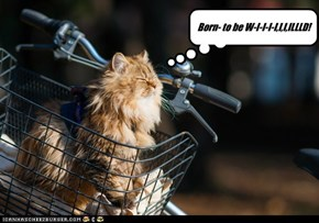Get your motor purrin'!