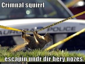Crimnal squirrl  escapin undr dir bery nozes.