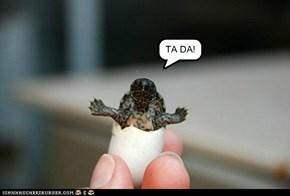 TA DA!