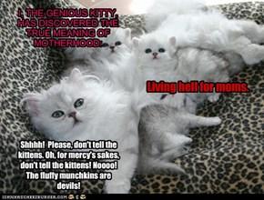 Nooo! Truly, the little furballs are the devil incarnate!