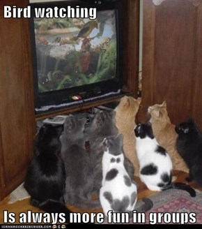 Bird watching  Is always more fun in groups