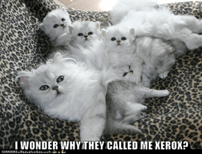I WONDER WHY THEY CALLED ME XEROX?