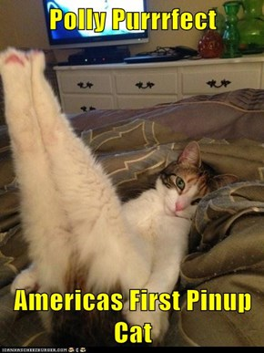 Polly Purrrfect  Americas First Pinup Cat