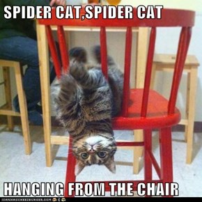 SPIDER CAT,SPIDER CAT  HANGING FROM THE CHAIR