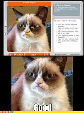 Grumpy AnaCat