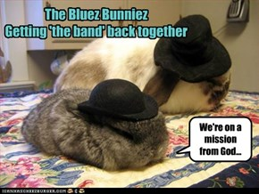 The Bluez Bunniez Getting 'the band' back together