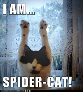 I AM...  SPIDER-CAT!
