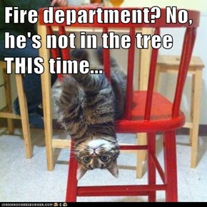 Fire department? No, he's not in the tree THIS time...