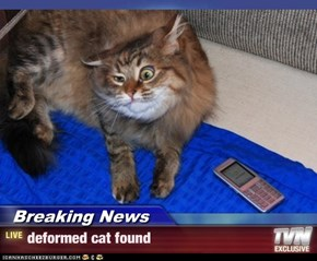 Breaking News - deformed cat found
