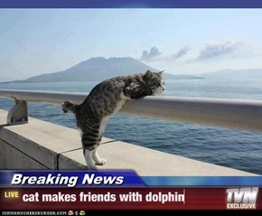 Breaking News - cat makes friends with dolphin