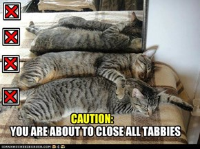 Close Tabbies!