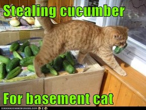 Stealing cucumber  For basement cat