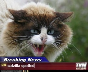 Breaking News - catzilla spotted