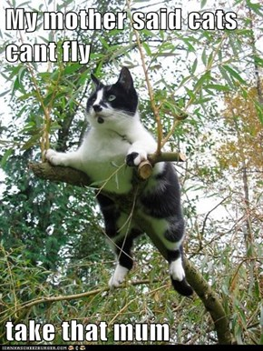 My mother said cats cant fly  take that mum