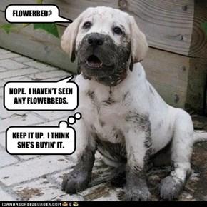FLOWERBED?