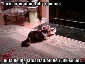 The ever-vigilant Lolly remains  outside the latest lair of the Evil Red Dot.
