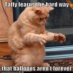 Taffy learns the hard way  that balloons aren't forever
