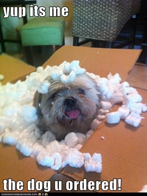 yup its me   the dog u ordered!