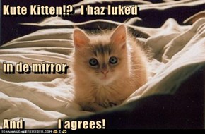 Kute Kitten!?   I haz luked in de mirror And              I agrees!