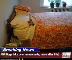 Breaking News - Dogs take over human beds; more after this