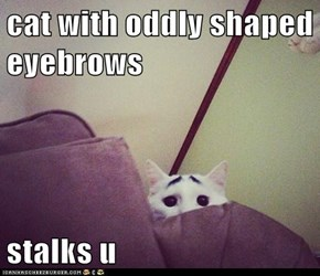 cat with oddly shaped eyebrows  stalks u