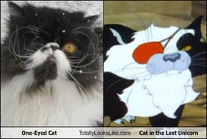 One-Eyed Cat Totally Looks Like Cat in the Last Unicorn
