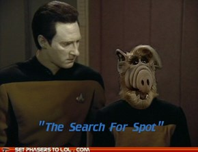 Ensign, where's my cat?