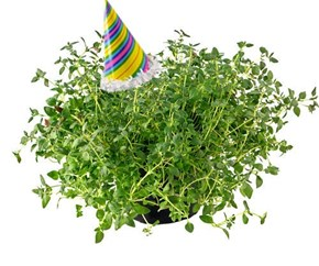 PARTY THYME!!!!!!!!
