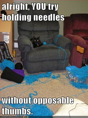 alright, YOU try holding needles   without opposable thumbs.