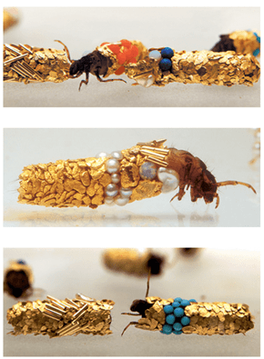 French Artist Goes for the Gold With Some Caddisfly Larval Cases