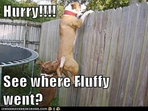 Hurry!!!!  See where Fluffy went?