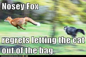 Nosey Fox  regrets letting the cat out of the bag.