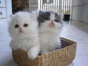 Cyoot Kitteh of teh Day: We Both Fits, We Both Sits