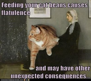 Feeding your cat beans causes flatulence  and may have other unexpected consequences...