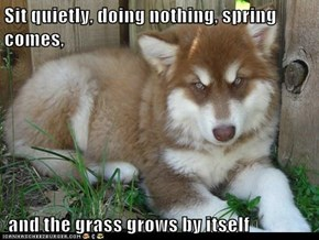 Sit quietly, doing nothing, spring comes,   and the grass grows by itself