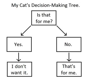 Making Choices is a Lot Easier When You're a Cat
