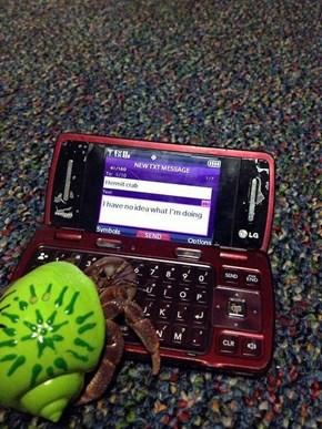 OK Who Gave Hermit Crab a Phone?