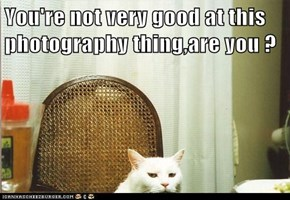You're not very good at this photography thing,are you ?
