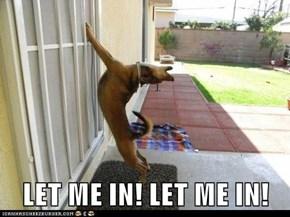 LET ME IN! LET ME IN!