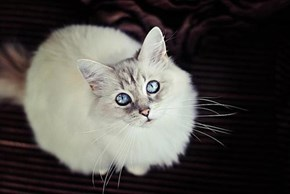 Cyoot Kitteh of teh Day: Baby Blues