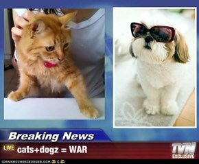 Breaking News - cats+dogz = WAR