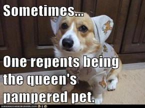 Sometimes...  One repents being the queen's pampered pet.