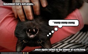 Basement Cat's evil plans...