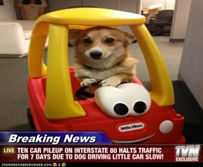 Breaking News - TEN CAR PILEUP ON INTERSTATE 80 HALTS TRAFFIC FOR 7 DAYS DUE TO DOG DRIVING LITTLE CAR SLOW!